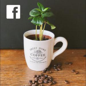 Icon Facebook | Kaffeetasse mit Blume
